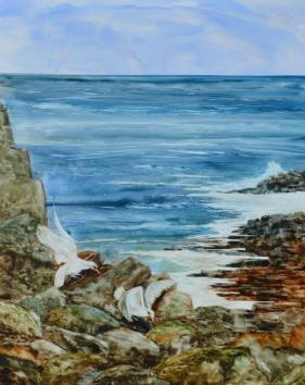 Shoreline Gulls