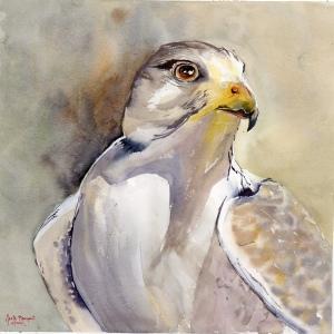 Deirdre's Hawk