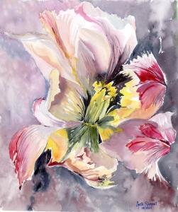 Teresa's Tulip